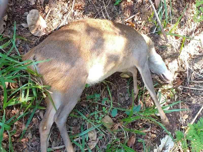 Leitor se revolta com atropelamentos de animais no Parque dos Poderes, em Campo Grande, MS