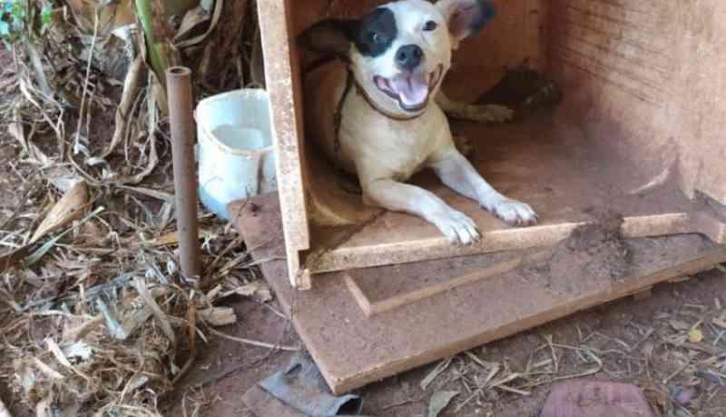 Chacareiro é preso por deixar cachorros amarrados em plantação de banana em Campo Grande, MS