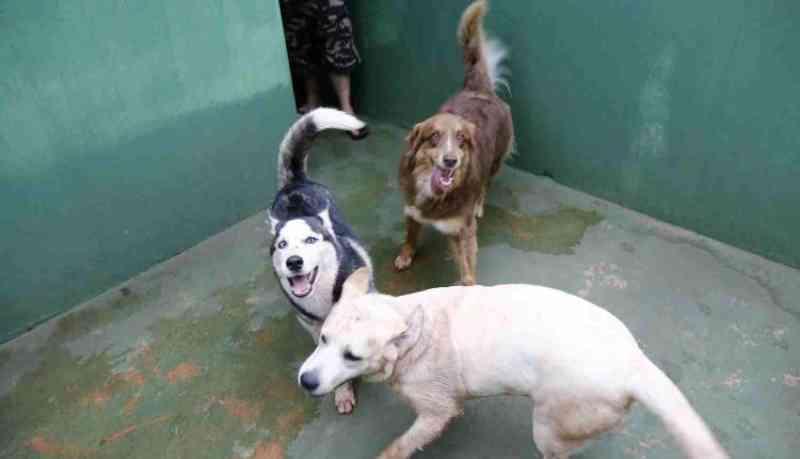 Condomínios de MS podem ser obrigados a denunciar maus-tratos a animais