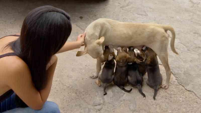 Prefeitura regulamenta lei que garante ajuda a cuidadores de animais de rua em Cuiabá, MT