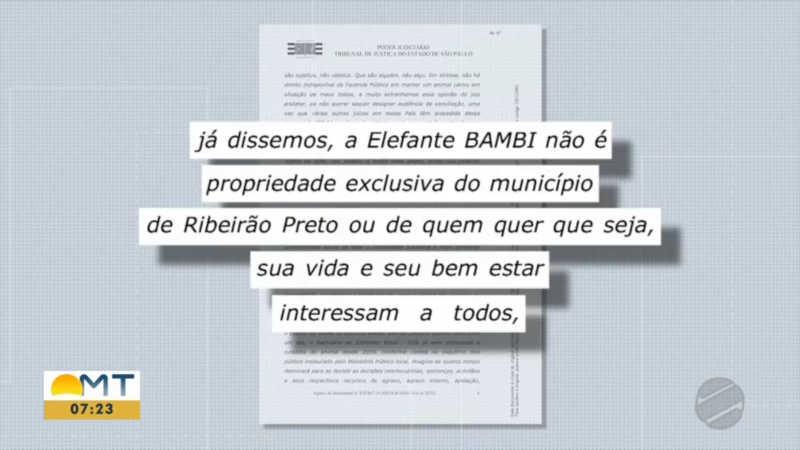 """Colegiado do TJSP refutou argumento do promotor Vanderlei Baptista Trindade Junior de que Bambi é """"patrimônio"""" de Ribeirão Preto. (Imagem: Reprodução / Bom Dia MT)"""