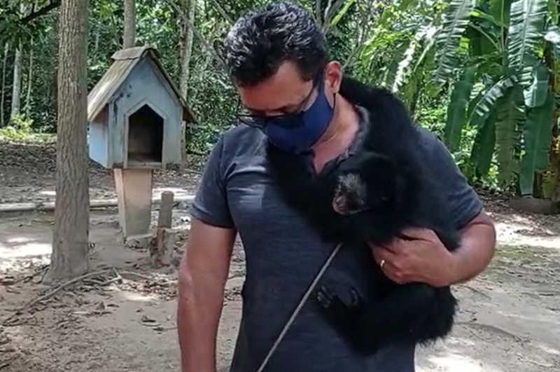 Macaco-aranha que estava preso a correntes há mais de 20 anos é resgatado em MT