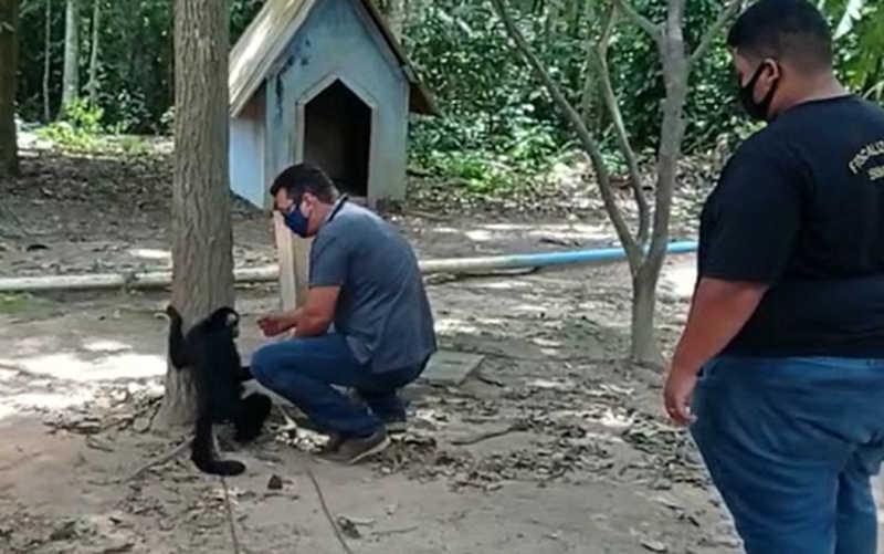 Animal estava acorrentado em uma árvore sem água e sem comida — Foto: Núcleo de Fiscalização Integrada