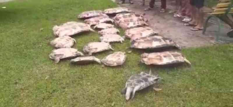 Após denúncia anônima, PM apreende 19 quelônios em residência no município de Curuá, no PA