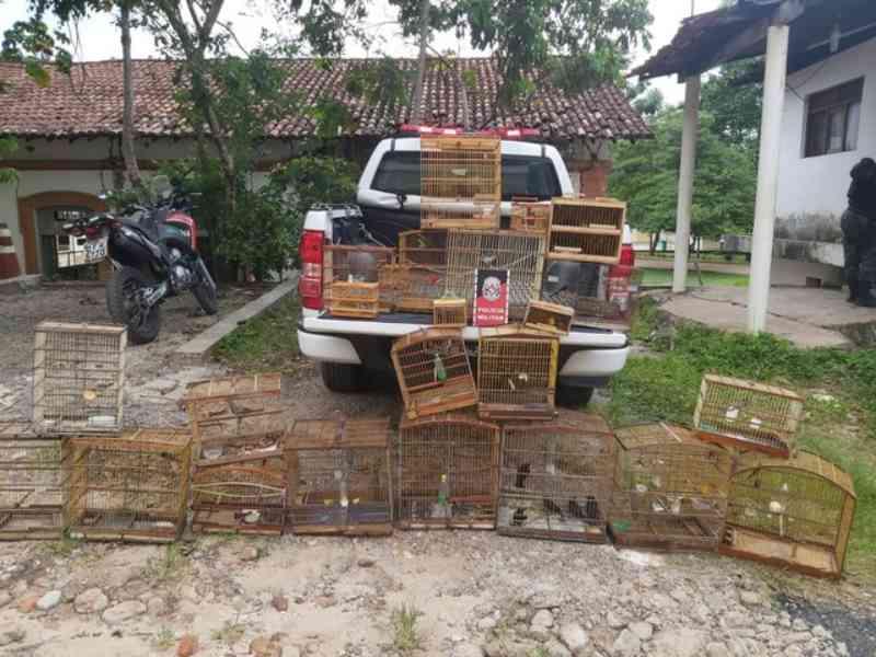 Homem suspeito de tráfico de animais é preso e 75 aves silvestres são apreendidas na Paraíba