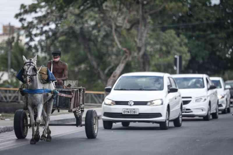 Tração animal pode ter proibição adiada no Recife, PE