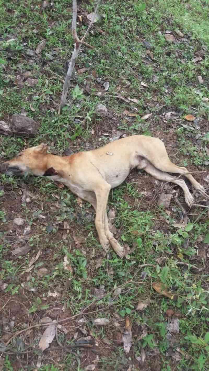 Moradores fazem protestos por morte de cachorros na zona rural de Beneditinos, PI
