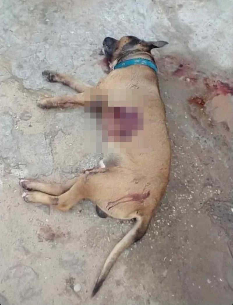 Homens matam cachorro a facadas na zona leste de Teresina, PI