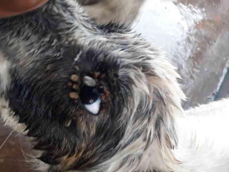 Ex-integrante de ONG é suspeita de maus-tratos contra animais em Apucarana, PR; veja