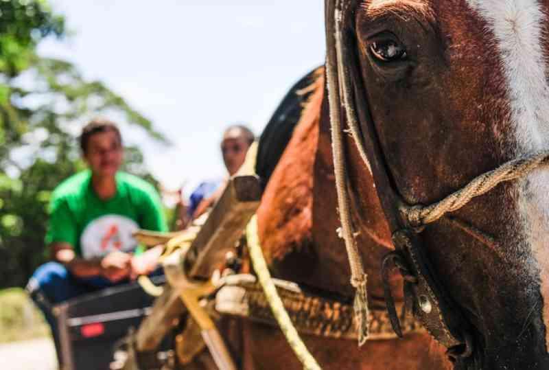 Câmara de Cascavel (PR) aprova lei que proíbe uso de carroças por tração animal na área urbana