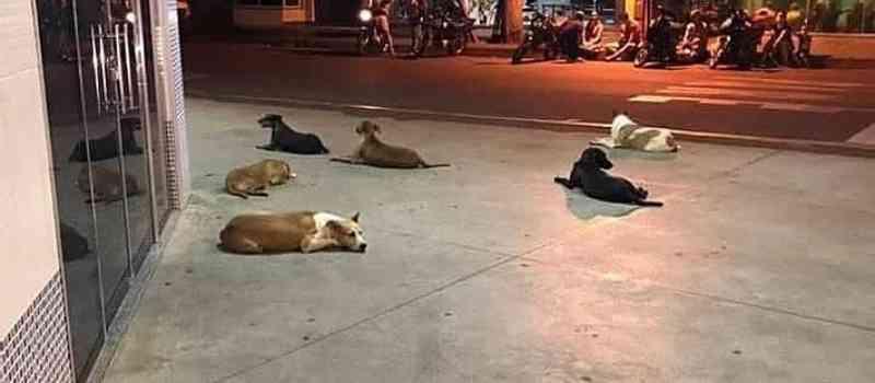 Morador de rua que ficou famoso por causa da vigília de cães na porta de um hospital, morre em Cianorte, PR