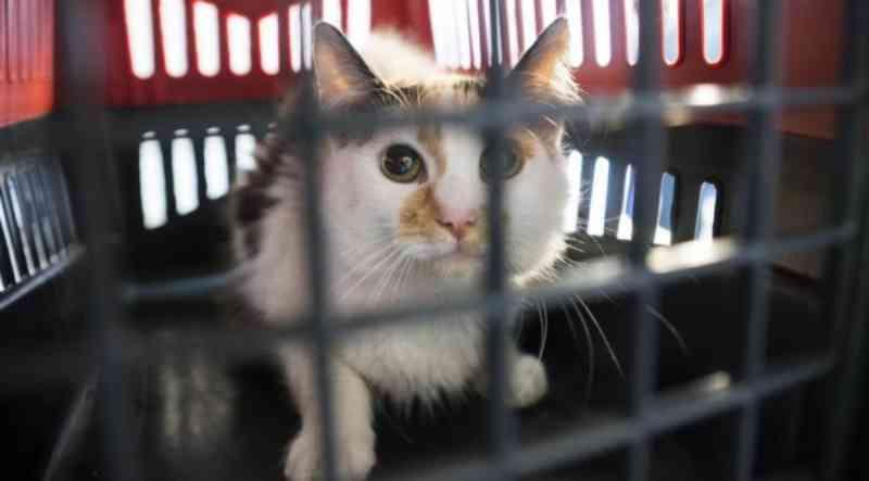 Agendamento para castração de cães e gatos de abril é adiado em Curitiba, PR