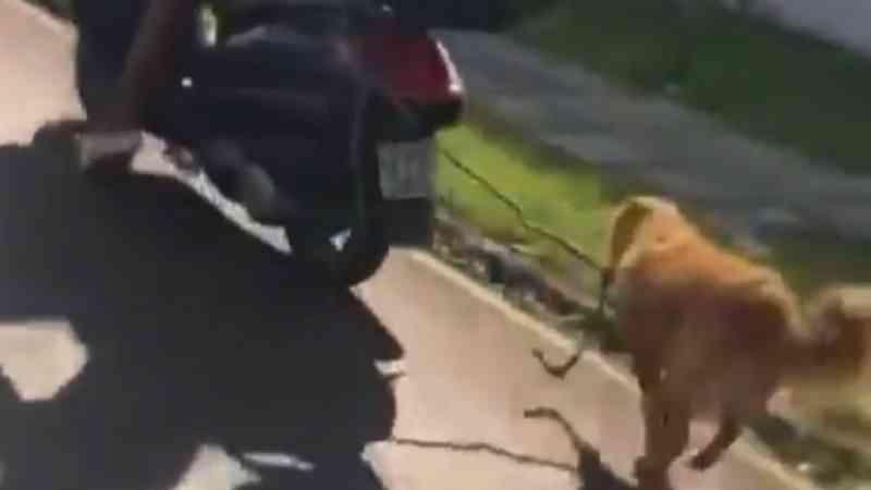 Cachorro filmado correndo amarrado atrás de moto em Curitiba (PR) é resgatado; VÍDEO