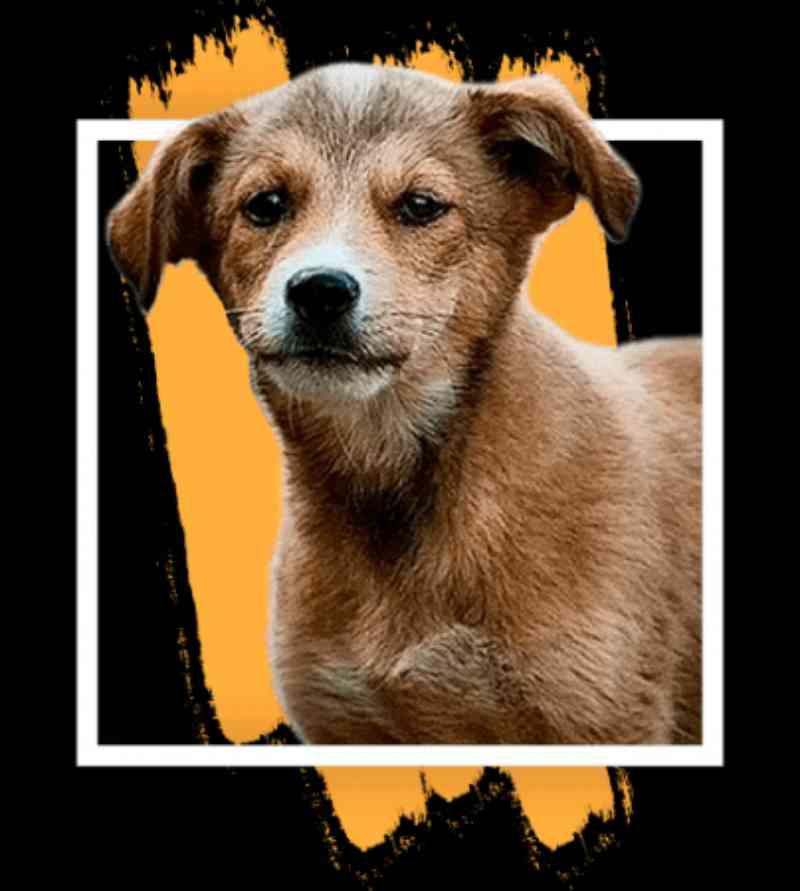 Site da Rede de Proteção ganha área de adoção de animais de Curitiba, PR