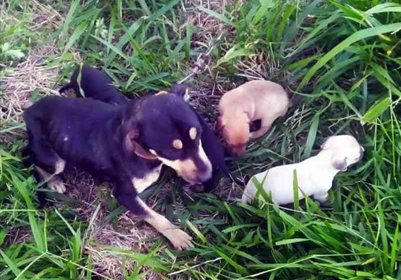 Homem é autuado por abandonar filhotes de cães em Mamborê, PR