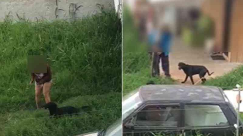 Mulher é presa em flagrante após ser gravada agredindo cachorro em Pinhais, PR