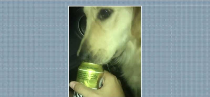 Imagens mostram cachorra lambendo a lata de cerveja, em Maringá — Foto: Polícia Civil/Divulgação