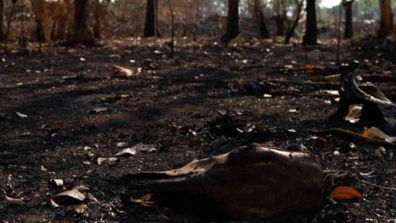 Investigação aponta envolvimento de empresas pecuaristas em queimadas no Pantanal