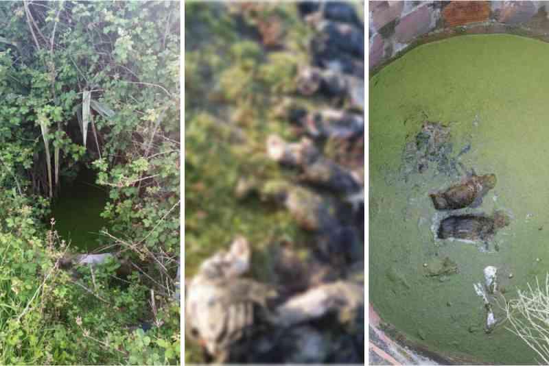 Associação denuncia morte de dezenas de animais em poços a céu aberto em Esposende, Portugal
