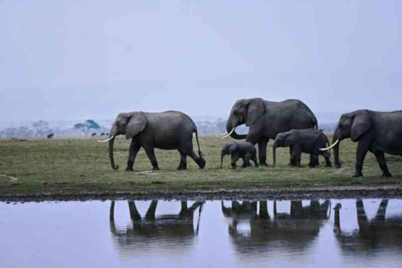 Elefantes do Quênia agora são ameaçados por cultivo de abacate