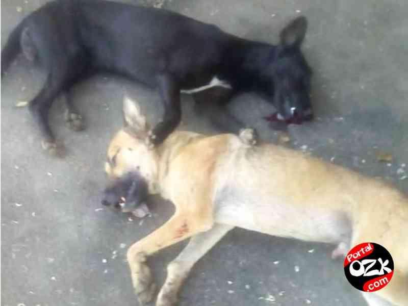 Cães são assassinados a tiros em Campos dos Goytacazes, RJ