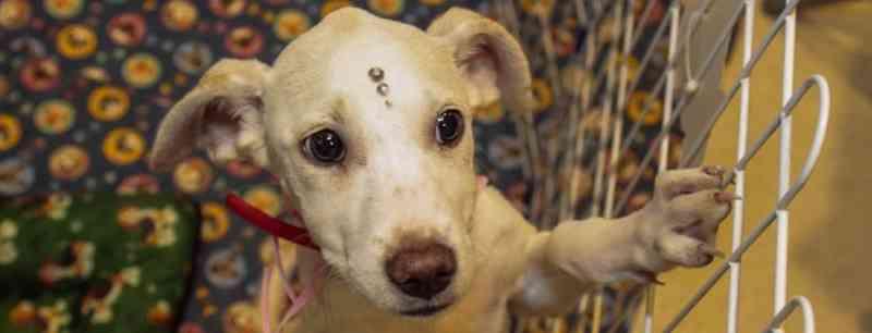 Câmara de Nilópolis (RJ) cria comissão permanente de direito dos animais