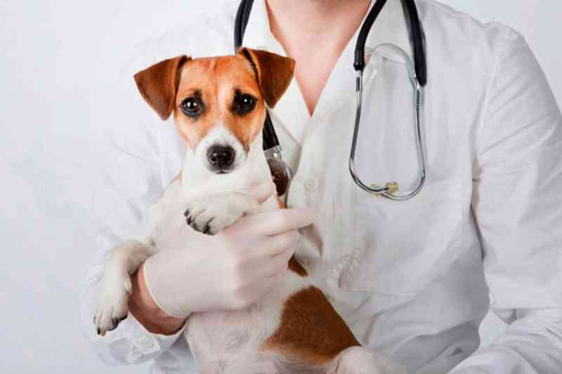 Nova Friburgo (RJ) providencia castramóvel para animais de pequeno porte