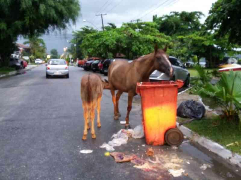 Cavalo deixado solto causa acidente, quebra pata e 'terá que ser' sacrificado em Paraty, RJ