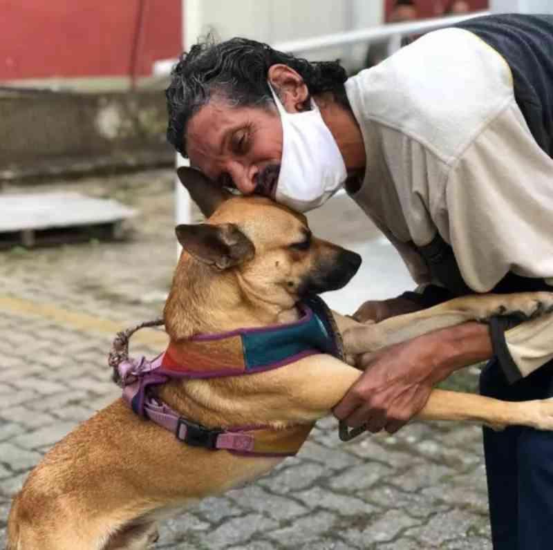 Câmara do RJ aprova projeto de lei para garantir que animais abandonados possam ser alimentados nas ruas