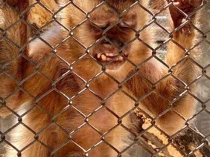 MPF recomenda ao Ibama que restabeleça imediatamente os cuidados e a recepção de animais silvestres em Seropédica, RJ
