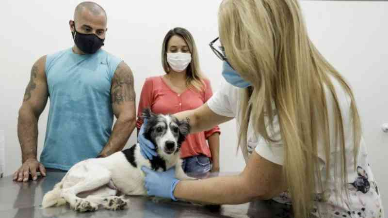 Rede de solidariedade ajuda a salvar cadela atropelada na Ilha do Governador, RJ