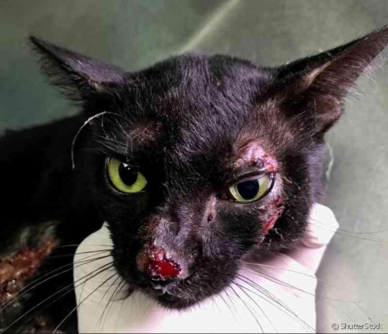 Polícia prende casal acusado de espancar gatos até a morte em Cerejeiras, RO; animais morreram sangrando pelo nariz