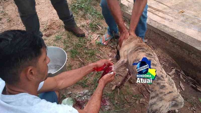 Homem atira com cartucheira em cachorro por estar incomodando sua cadela