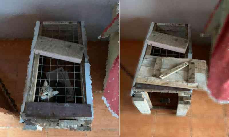 Moradora denuncia sequestros e maus-tratos a animais em Dois Irmãos, RS