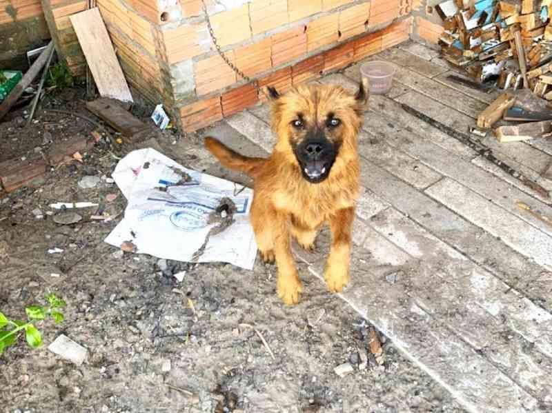 Departamento de Proteção Animal resgata cão vítima de maus-tratos em Imbé, RS