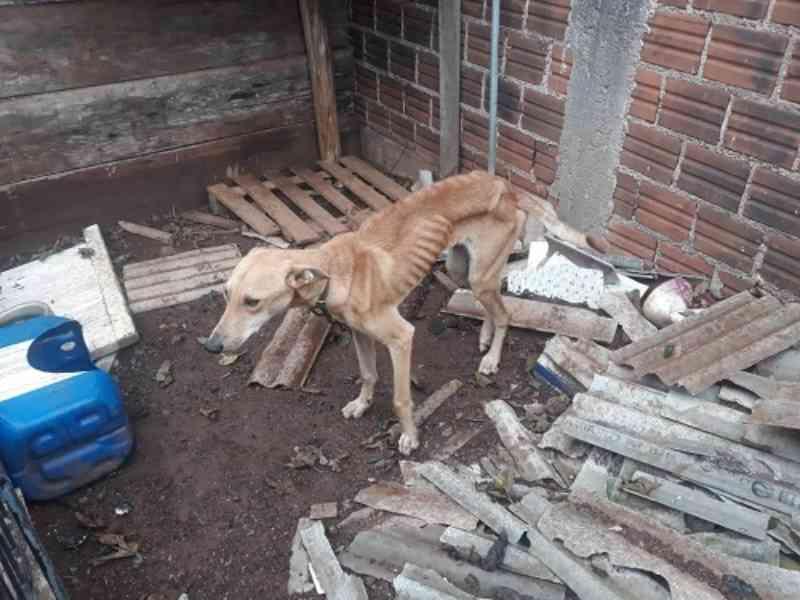 Homem é preso por deixar cão sem comer por mais de uma semana em Lajeado, RS