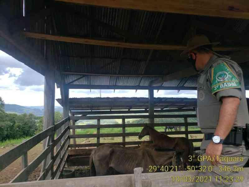 Polícia Ambiental averigua denúncia de maus-tratos a cavalos em Rolante, RS