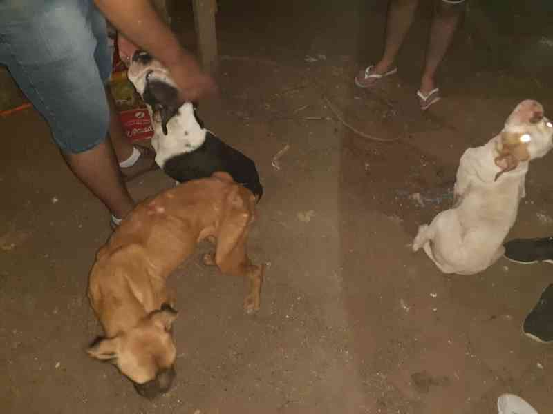 Homem é preso por maus-tratos a animais em Taquari, RS