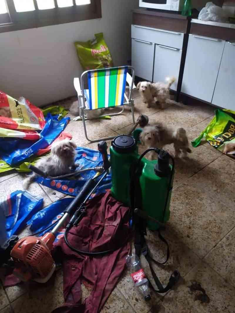 Mais de 20 cães abandonados são resgatados pela Brigada Militar em Viamão, RS