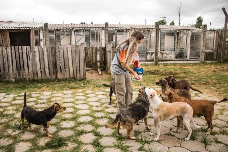 Quase 50 animais esperam por um novo tutor em abrigo de Pelotas, RS