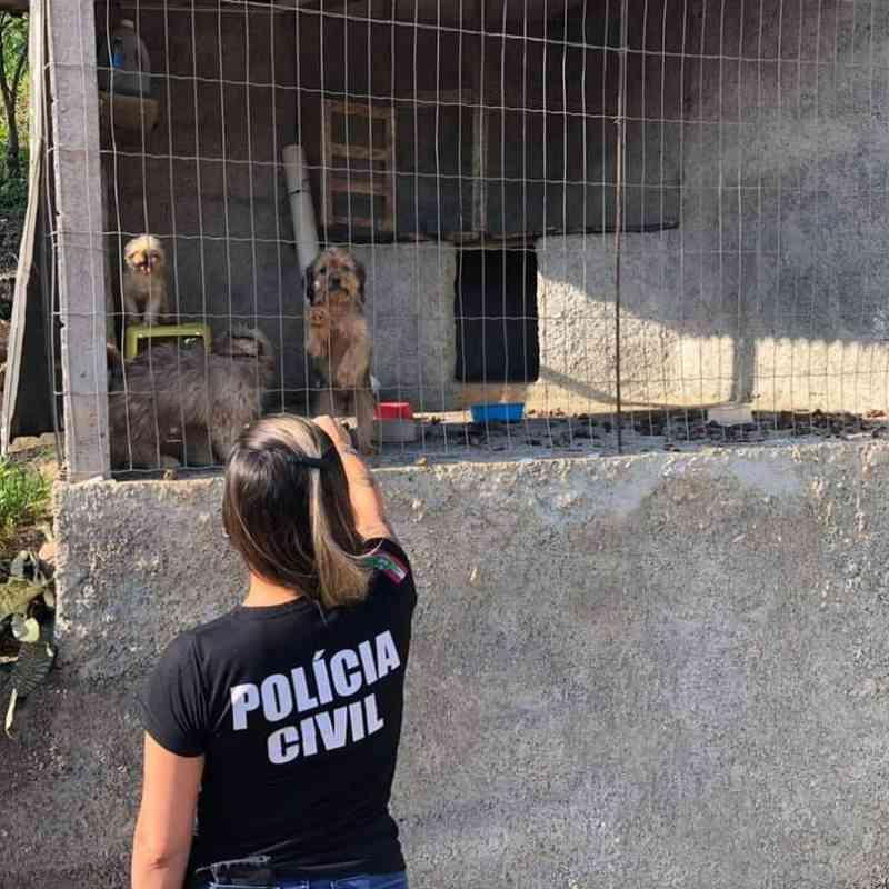Casal é preso em flagrante por maus-tratos a cachorros em Ascurra, SC; vídeo