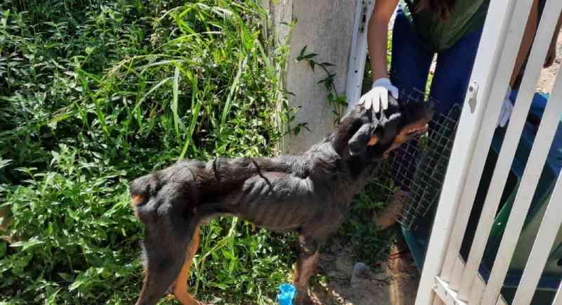 Jovem é preso por maus-tratos a dois cachorros em Blumenau, SC