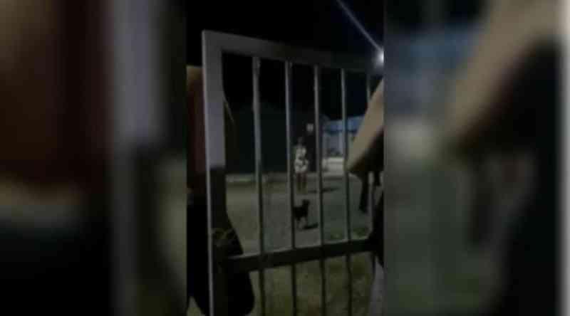 Mulher é indiciada por matar cachorro a chutes e pontapés em Bombinhas, SC
