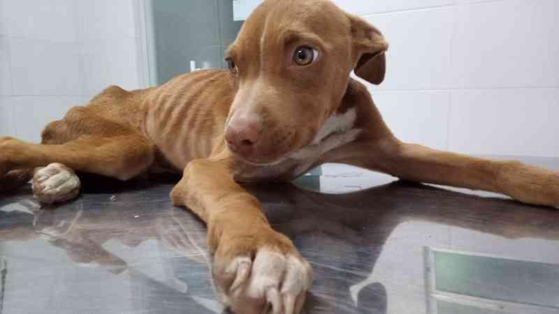 Dois cães são resgatados em situação extrema de maus-tratos em Florianópolis, SC