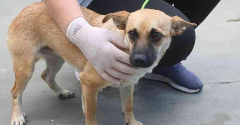 Câmara de Jaraguá do Sul (SC) aprova investimentos para atender animais vítimas de maus-tratos