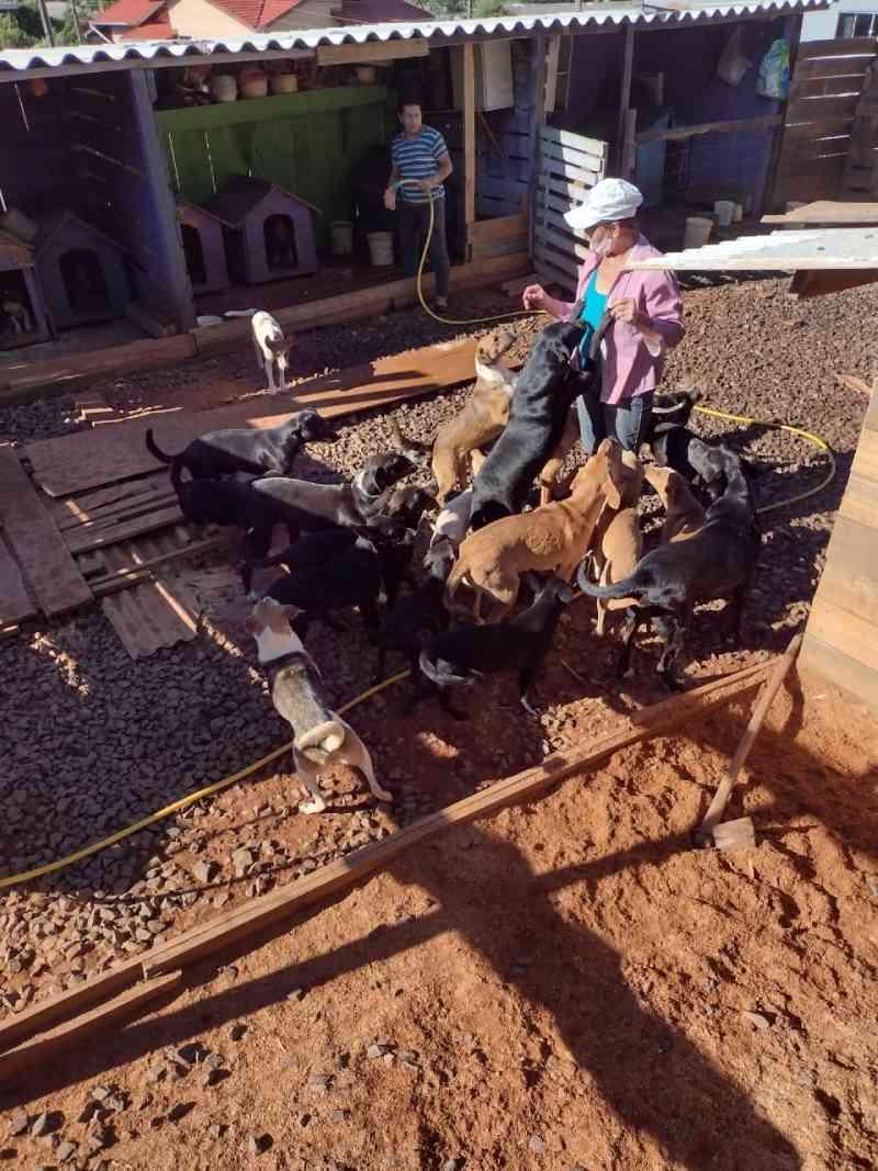 ONG Pêlos e Apelos de Ponte Serrada (SC) necessita de ajuda da população