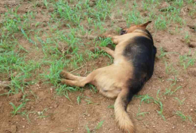 Acusado de atirar e matar três cães em São Martinho (SC) pode pegar mais de cinco anos de prisão