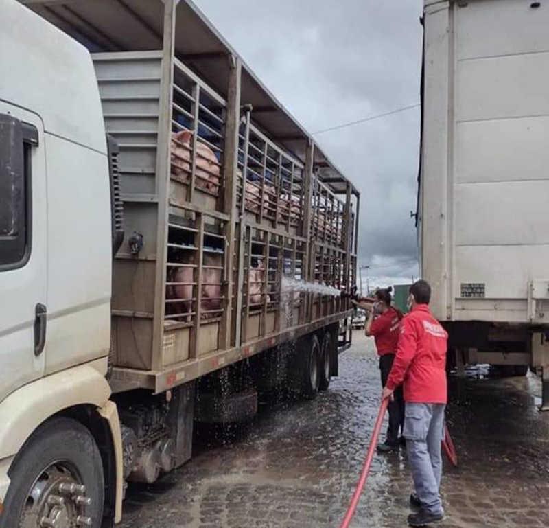 Seis porcos acabaram morrendo devido o calor na tarde de domingo (28) – Foto: Bombeiros Voluntários de Irani/Divulgação