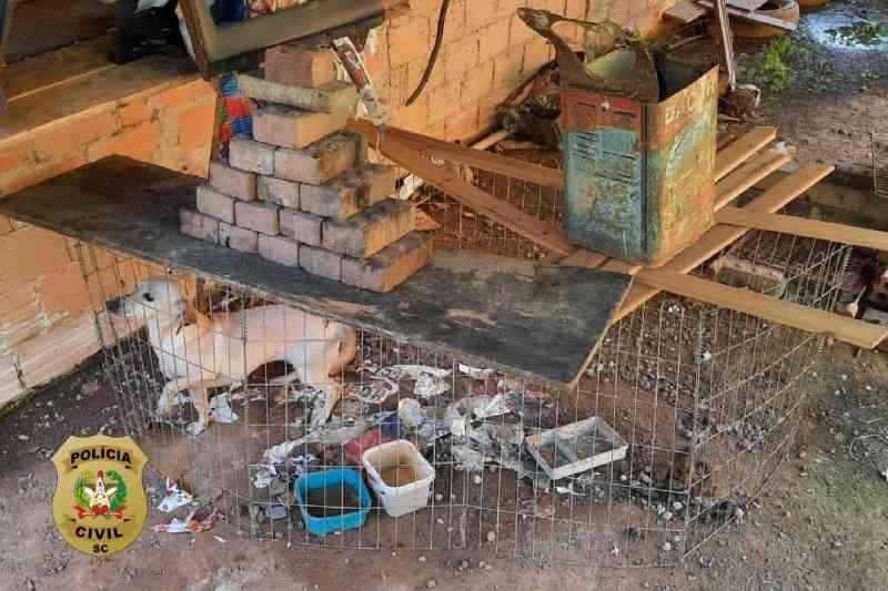 Polícia Civil resgata cachorro que estava sem água e comida em SC