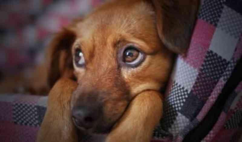 Projeto de Lei propõe que detentos construam abrigos para animais de rua